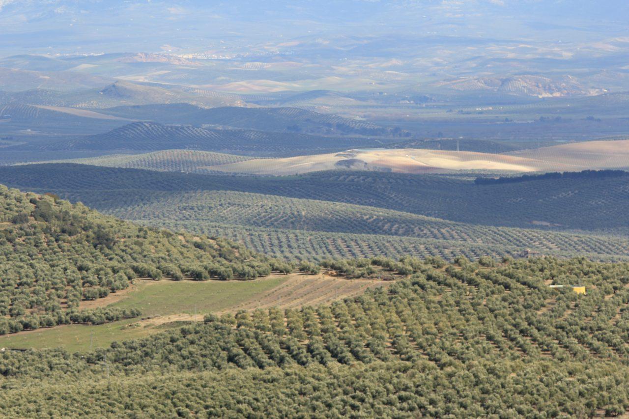 Programa de la World Oil Olive Exhibition