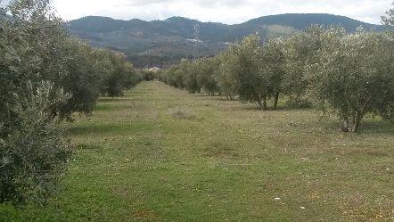 Las ayudas de la Junta permitirán la incorporación de 1.492 jóvenes a la actividad agrícola y ganadera