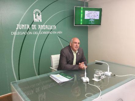 Las ayudas para modernizar explotaciones de olivar en Andalucía superan los 10 millones de euros