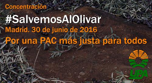 UPA-Andalucía exige hoy con una concentración ante el Ministerio de Agricultura ayudas asociadas para el olivar en pendiente