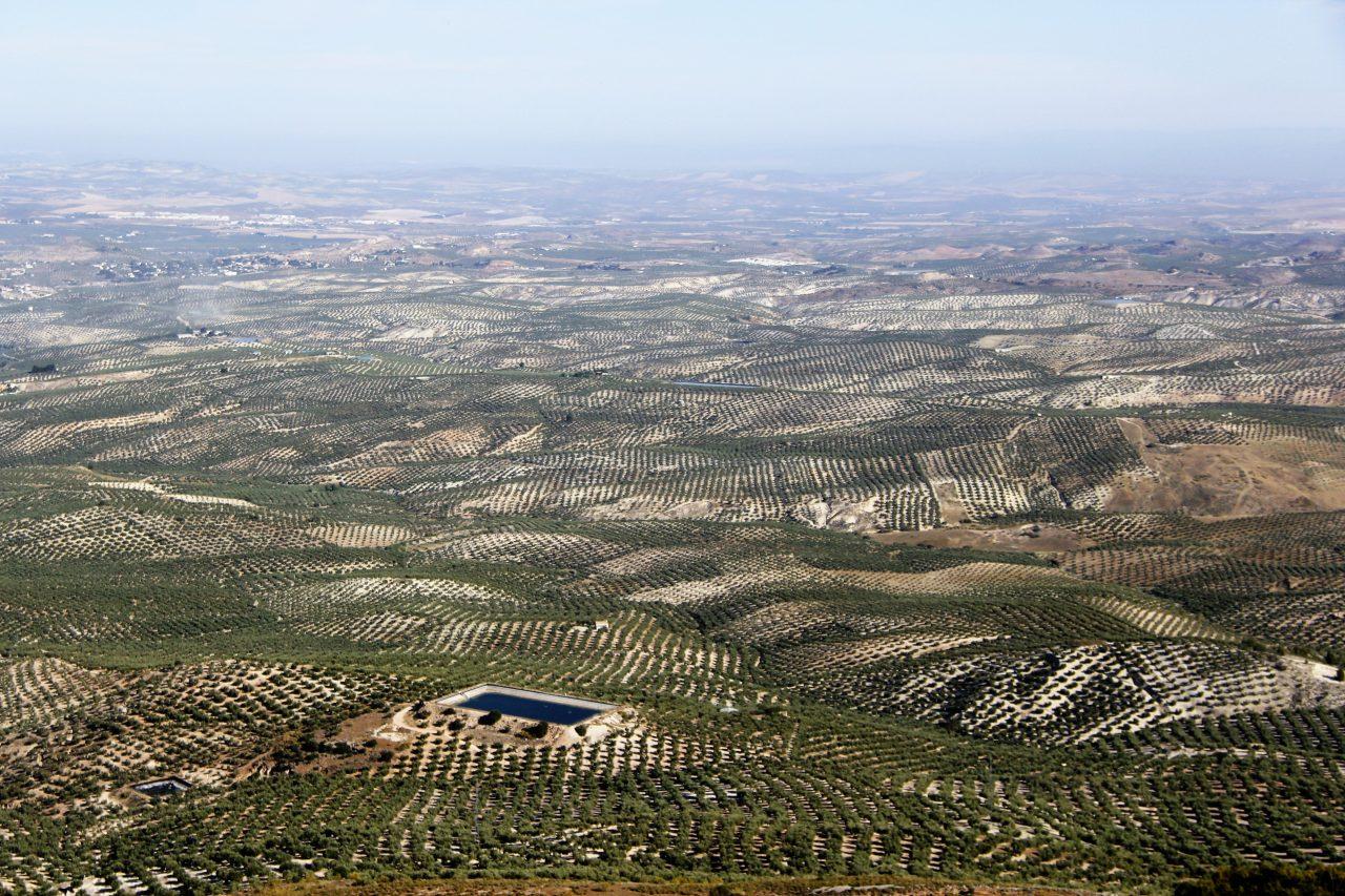 La Junta propone la revisión de las ayudas asociadas de la PAC para incluir el olivar en pendiente