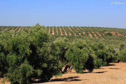 ASAJA-Jaén agradece a la Junta la ampliación del plazo para las ayudas a la modernización de explotaciones