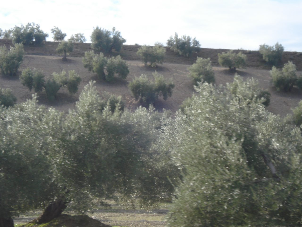 El plazo de solicitud de ayudas para la modernización de explotaciones agrarias acaba el 24 de septiembre