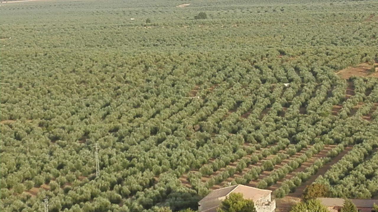 El sistema agroalimentario aportó el 10,3% del PIB en 2014