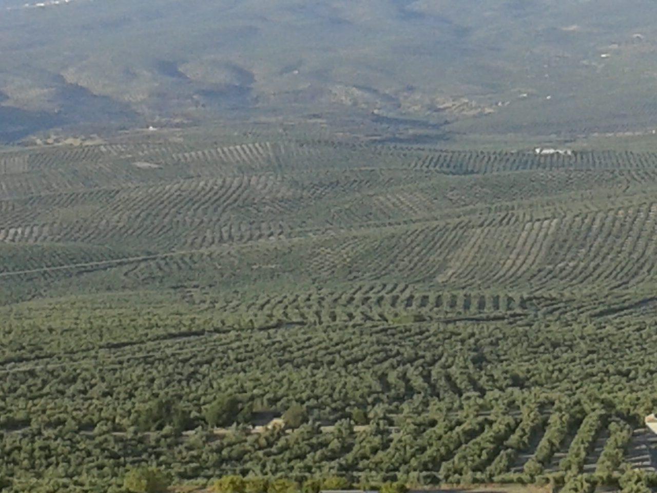 El estock de orujillo amenaza con la paralización del sector orujero
