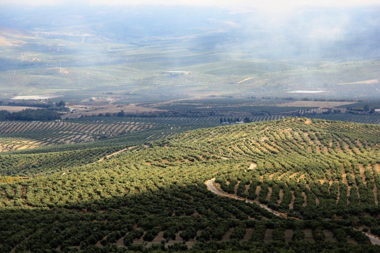 La Junta estima que Andalucía perderá más de 891 millones de euros hasta 2020 con la reforma de la PAC