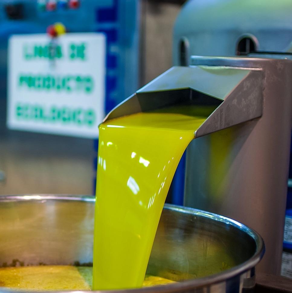 Interóleo destaca la comercialización récord de aceite de oliva en el mes de junio
