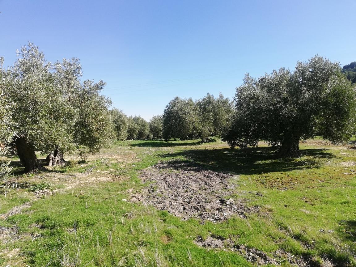 El Ministerio de Agricultura asigna los nuevos derechos de la Reserva Nacional de Pago Básico solicitados en 2020