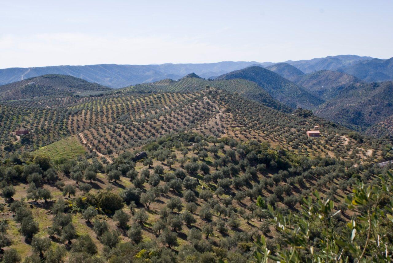 La Junta destaca el trabajo realizado por la candidatura del Paisaje del Olivar en Andalucía
