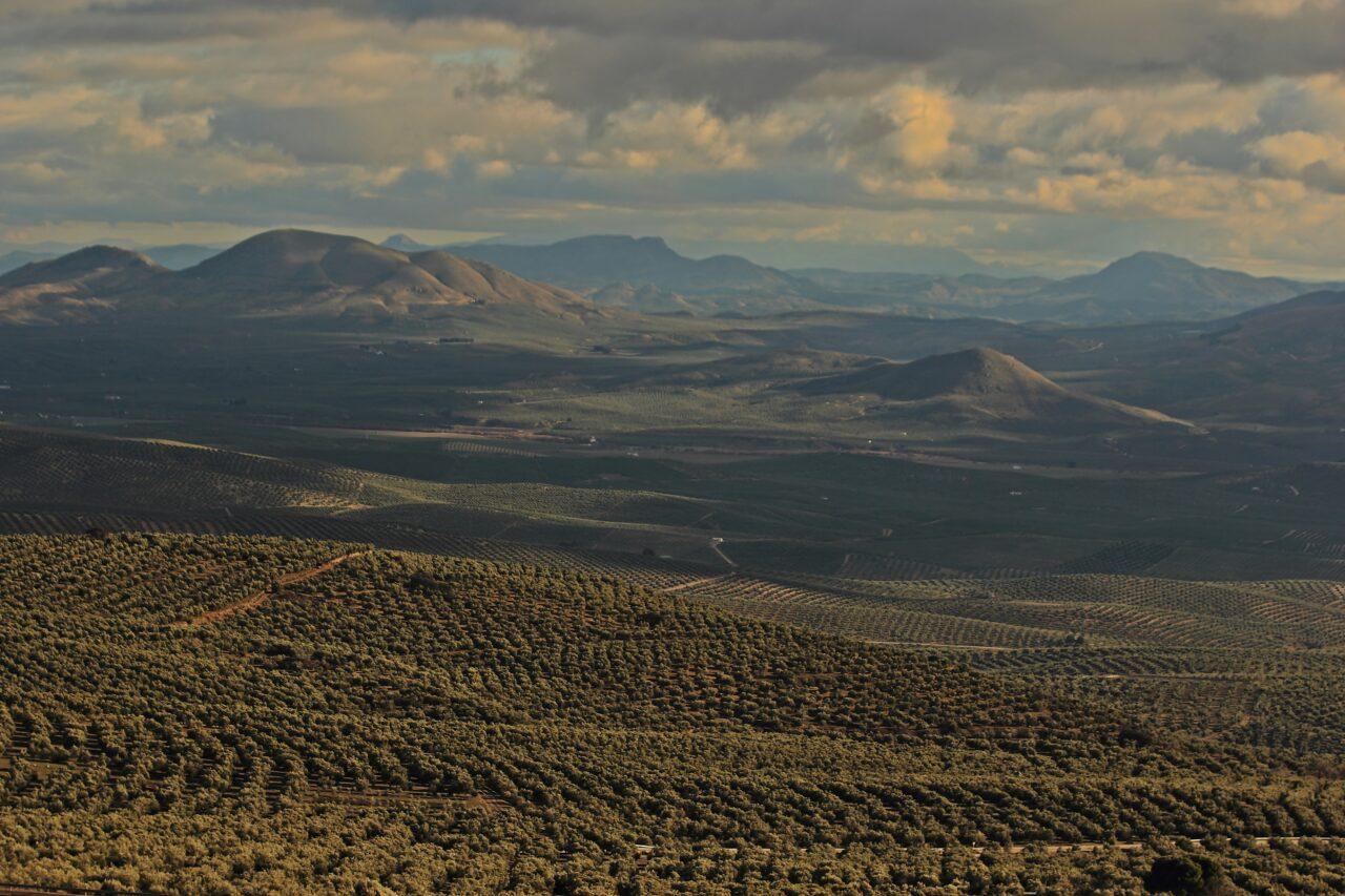 España presentará 'Los paisajes del olivar en Andalucía' como nueva candidatura a Patrimonio Mundial de la UNESCO en 2022