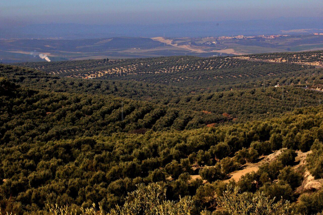 ASAJA-Jaén destaca la ligera caída en el ritmo de salidas del mes de abril, con cerca de 135.000 toneladas