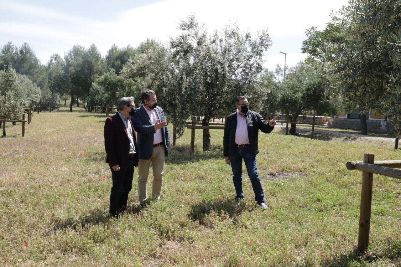 Una treintena de variedades de olivar conforman un jardín promovido por la Diputación de Jaén en la Vía Verde del Aceite