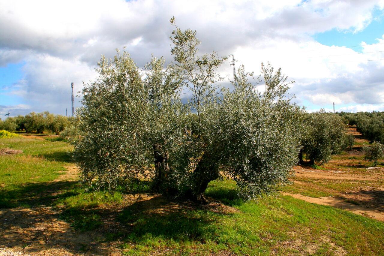 El 10 % de la superficie agraria en España ya es ecológica y supera los 2,4 millones de hectáreas en 2020