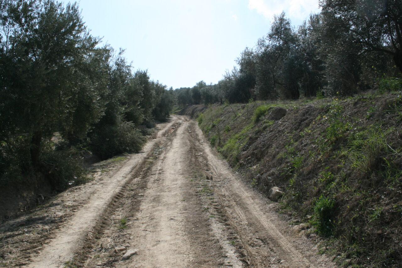 El PSOE exige a la Junta que impulse un plan de apoyo al olivar