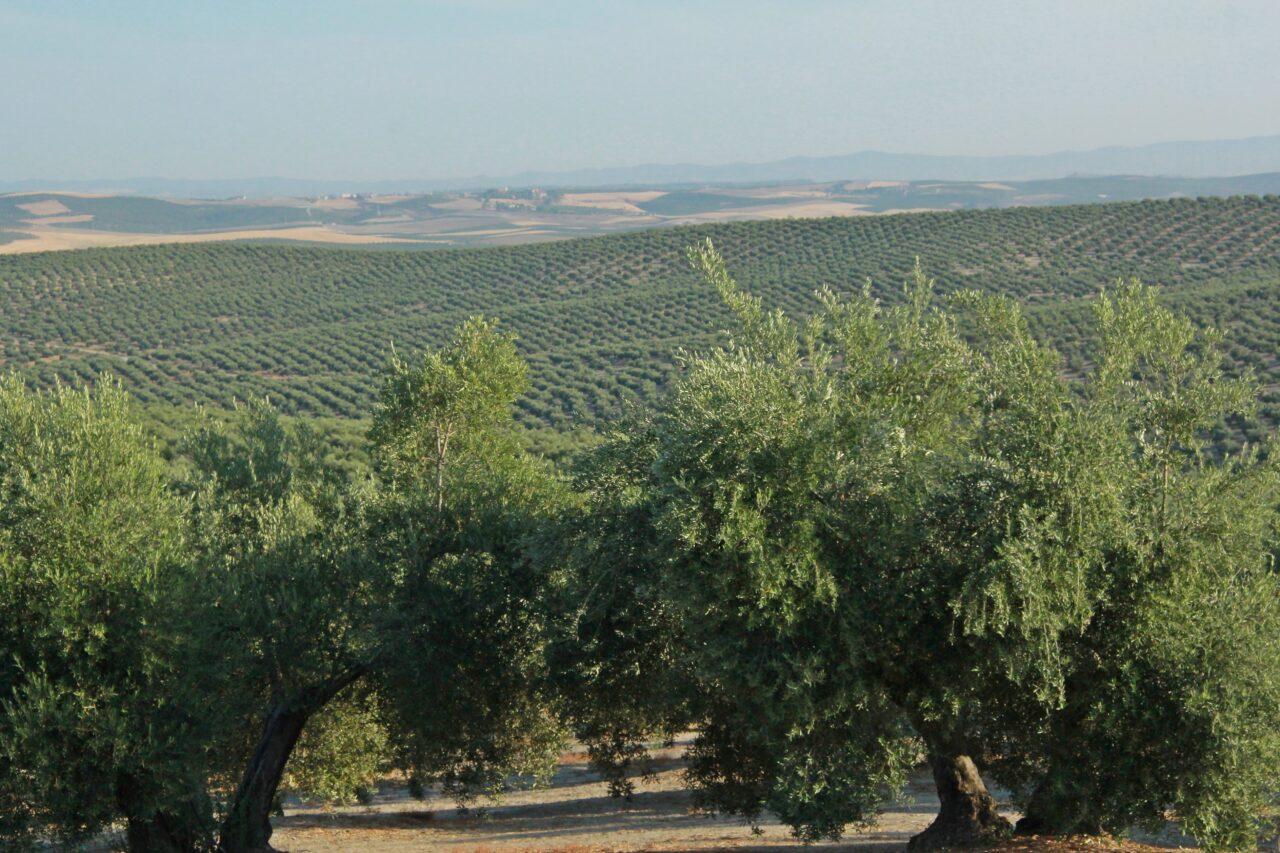 España solicita a la Comisión Europea el incremento de hasta el 70% de los anticipos de la PAC y del 85% de las de Desarrollo Rural