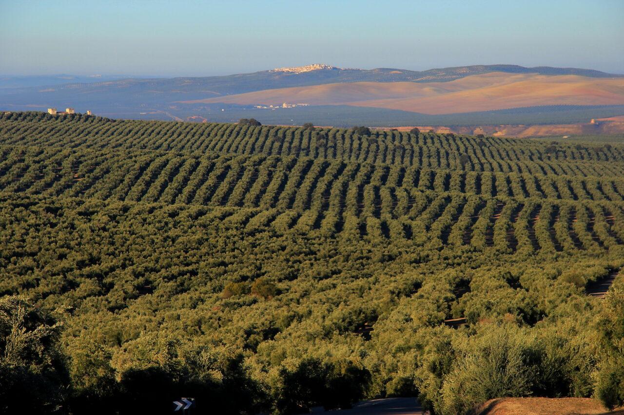 La explotación agraria media en España tiene 46,9 hectáreas