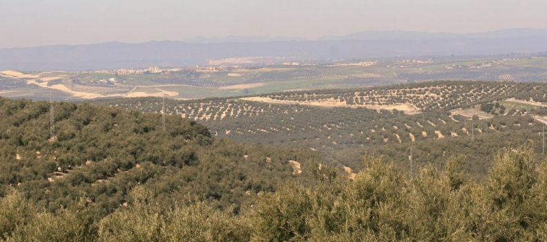 La Diputación de Jaén amplía el plazo de solicitud de ayudas para el fomento de los cultivos alternativos al olivar