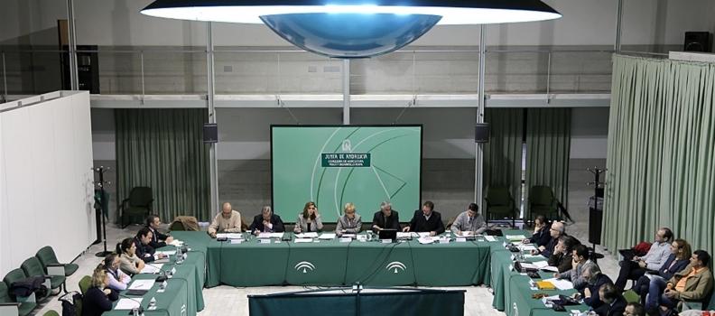 El Consejo Andaluz del Olivar aborda el Plan Director del Olivar