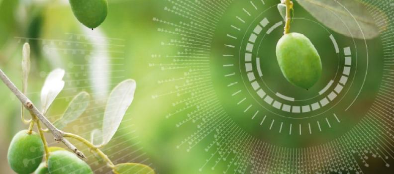 GEA presentará en Expoliva 2021 un novedoso sistema de control y automatización de almazaras