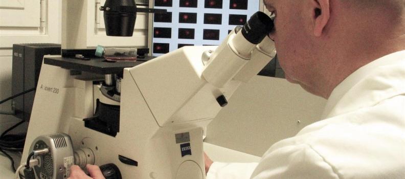 Un grupo de la UJA analiza las propiedades beneficiosas de 4 compuestos del aceite de oliva virgen en una publicación científica
