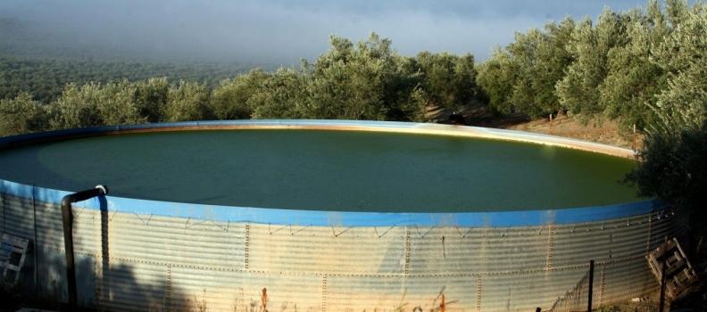 La Junta de Andalucía abona en julio y agosto 19 millones de euros en ayudas agroambientales