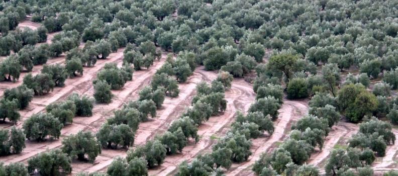 El Gobierno estudia el anteproyecto de Ley de representatividad de las organizaciones profesionales agrarias y la creación del Consejo Agrario