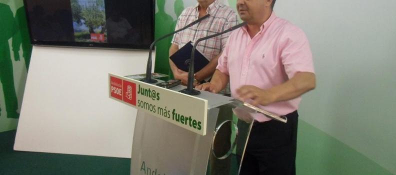 El PSOE de Jaén advierte del riesgo «real» de que más de la mitad de los olivareros pierda el 30% de sus ayudas