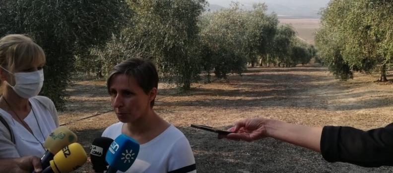 La delegada de Agricultura destaca el proyecto del Grupo Oleícola Jaén para modernizar sus instalaciones