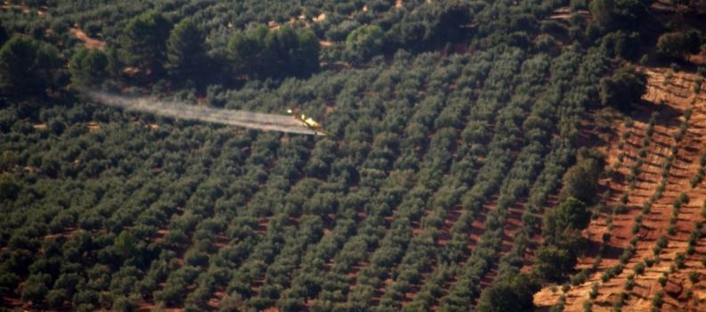 La DO Sierra de Segura comienza los tratamientos de control de la plaga de la mosca del olivo