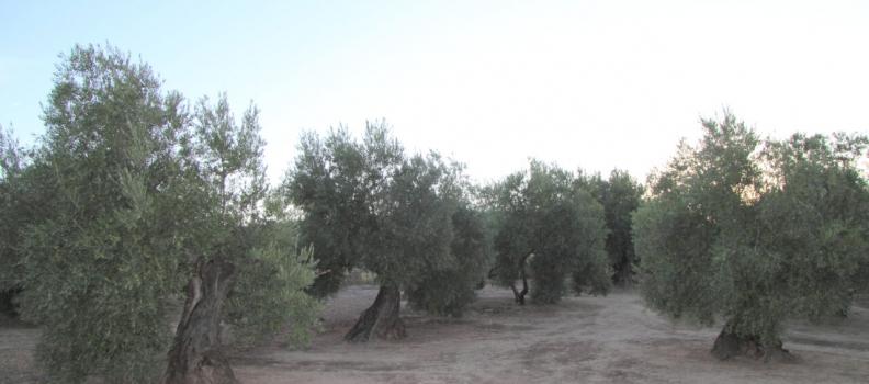 El sector agrario lamenta «el menosprecio de Luis Planas al campo andaluz al avanzar con su Plan Estratégico»
