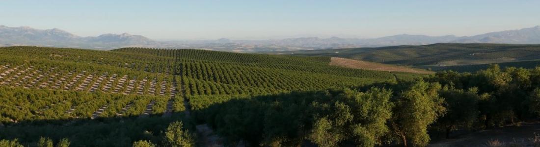 Crece el valor de las exportaciones de aceite de oliva en la pasada campaña