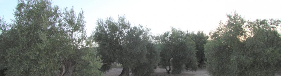 Agricultores y ganaderos de toda Andalucía se manifiestan este jueves en Sevilla para exigir a Luis Planas que rectifique su propuesta de Plan Estratégico de la PAC