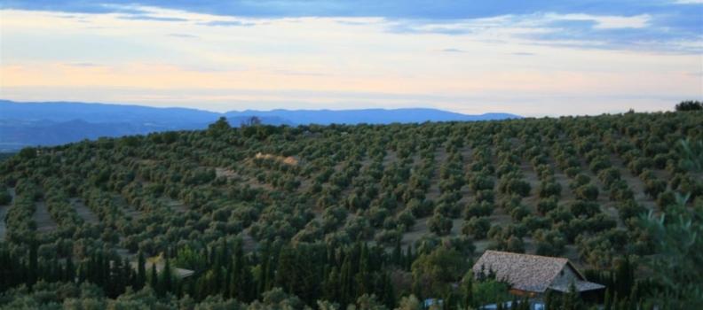 Casi 800.000 toneladas de aceite de oliva se han comercializado en estos nueve meses de campaña