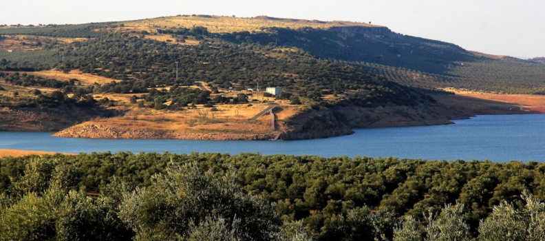 El Gobierno confirma que habrá riego de apoyo al olivar  en octubre de hasta 40 hectómetros cúbicos