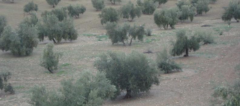 La Junta autoriza el pago de 10,5 millones de euros de ayudas directas de la PAC en el marco de la campaña 2012