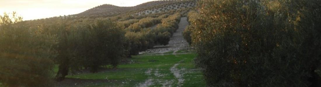 La UNIA de Baeza acoge la fase presencial del XI Máster en Agroecología
